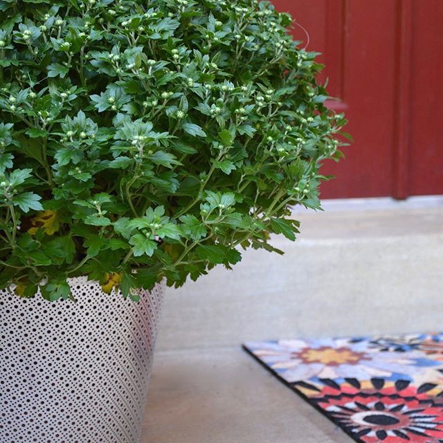 Add a splash of color to your home with fall flowers and this galvanized steel planter from @ThriftDiving!